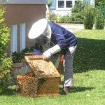 Starting a Beehive