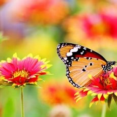 Top 10 Grow Your Own Butterfly Kits