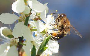 Hobby Beekeeping