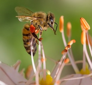 pesticides and honey bees