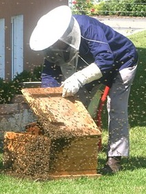 Why do Beekeepers wear White