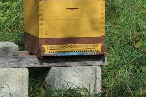 Beehive stand