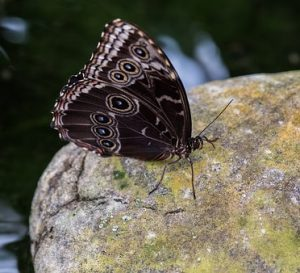Butterfly Resting