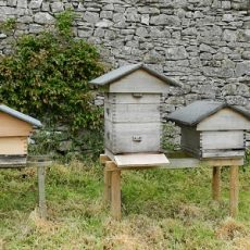 Guide to Beehives and Where to Locate Them