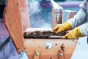Caring for Beehive