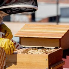 Maintain Your Beehives Through the Seasons