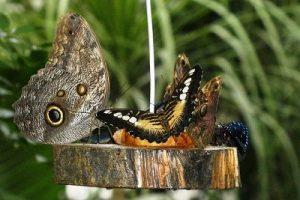 Creating Butterfly Garden