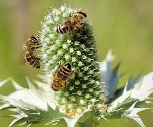 Bees Declining