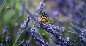 Herbs and bees